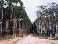Workshop Mengenal Hutan dan Kehutanan