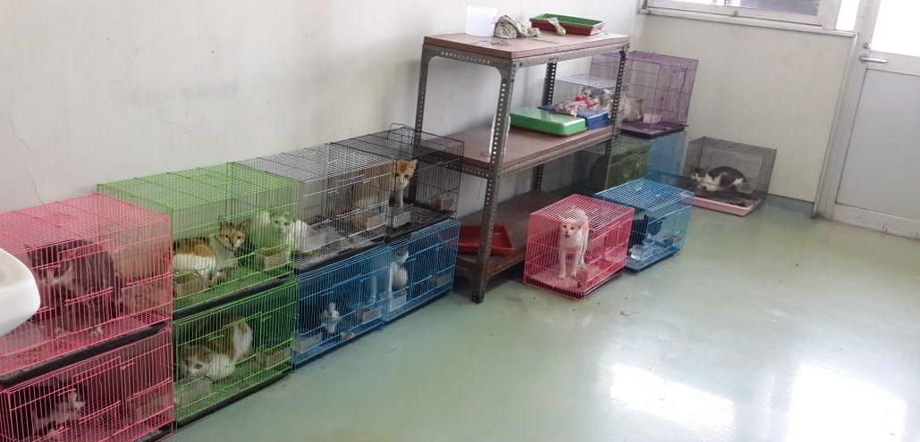 Pengendalian Populasi Kucing di Sekitar Kampus ITB Ganesa