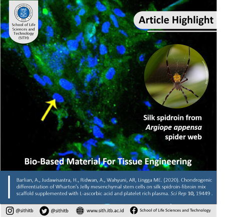 Chondrogenic differentiation of Wharton's Jelly mesenchymal stem cells on silk spidroin-fibroin mix scaffold supplemented with L-ascorbic acid and platelet rich plasma