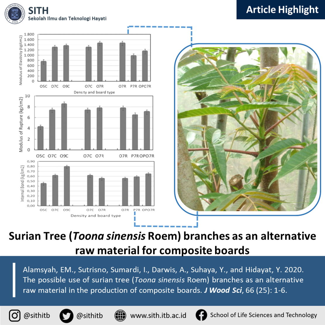 The possible use of surian tree (Toona sinensis Roem) branches as an alternative raw material in the production of composite boards