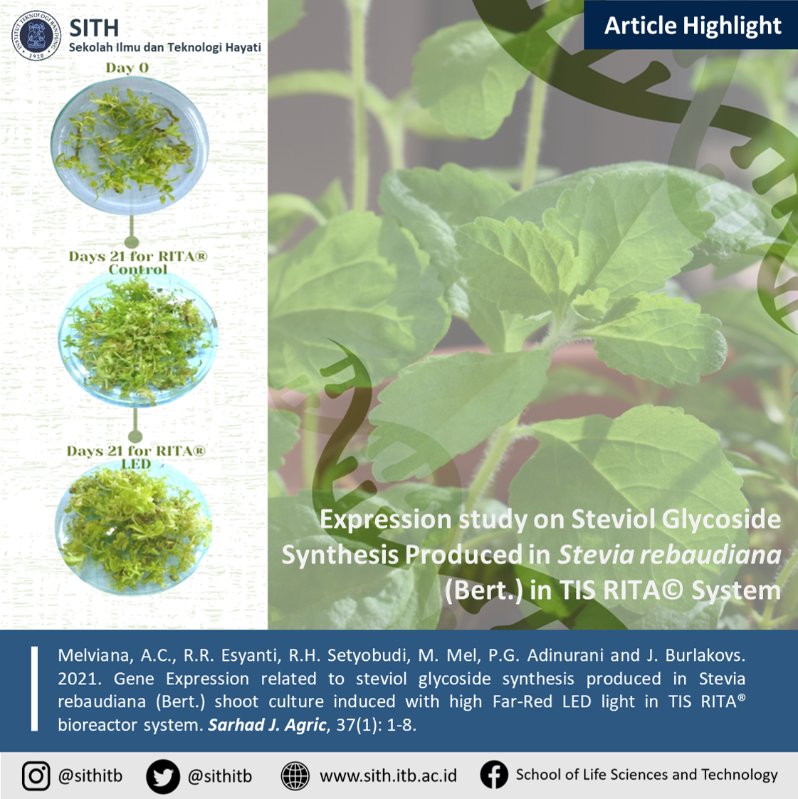 Expression study on Steviol Glycoside Synthesis Produced in Stevia rebaudiana (Bert.) in TIS RITA System